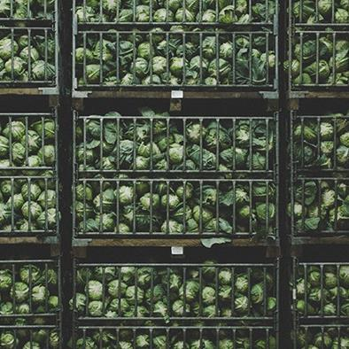 shelves of cabbages in metal baskets at a warehouse